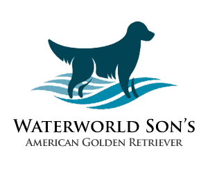Waterworld Son's | Golden Retriever Americano